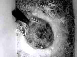 Holkbild 2014-06-08 sover